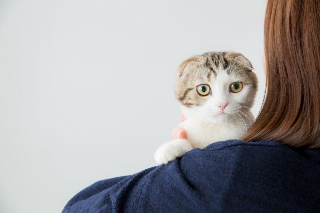 【「飼い猫」のニャン吉は見た!】出会いに恵まれない飼い主の詩織(33歳)でも「結婚前提に付き合える理想の彼氏」をGETできた「意外な方法」とは?