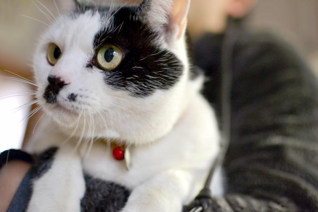 【「飼い猫」のニャン吉は見た!】出会いに恵まれない飼い主の祐介(33歳)でも「結婚前提に付き合える理想の彼女」をGETできた「意外な方法」とは?